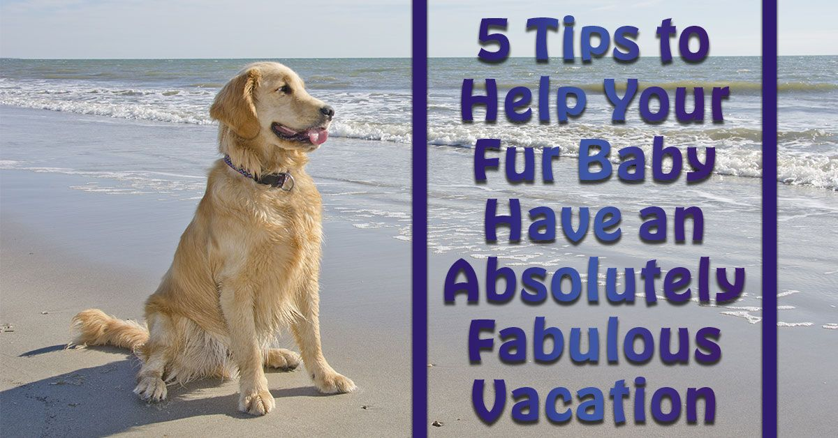 Help Your Fur Baby Have an Absolutely Fabulous Vacation