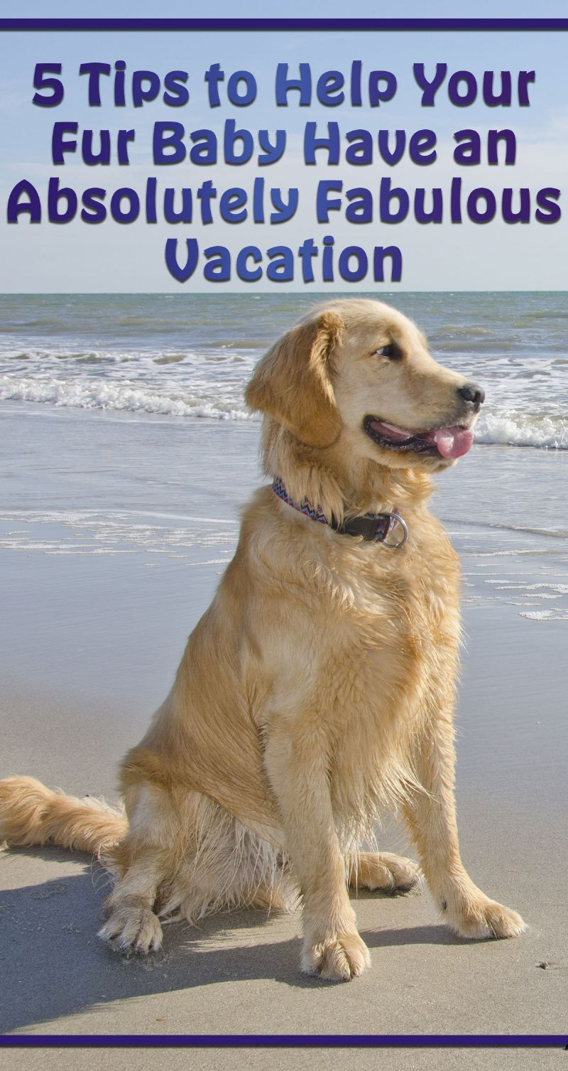 Help Your Fur Baby Have an Absolutely Fabulous Vacation Pin