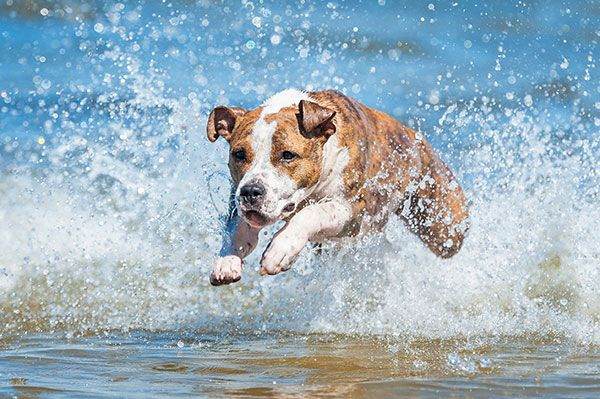 Splashing Puppy