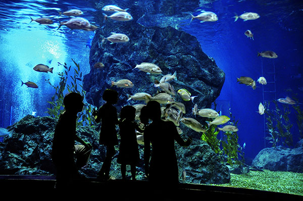 5 ways to have the best holiday season in sunset beach for Precio entrada aquarium