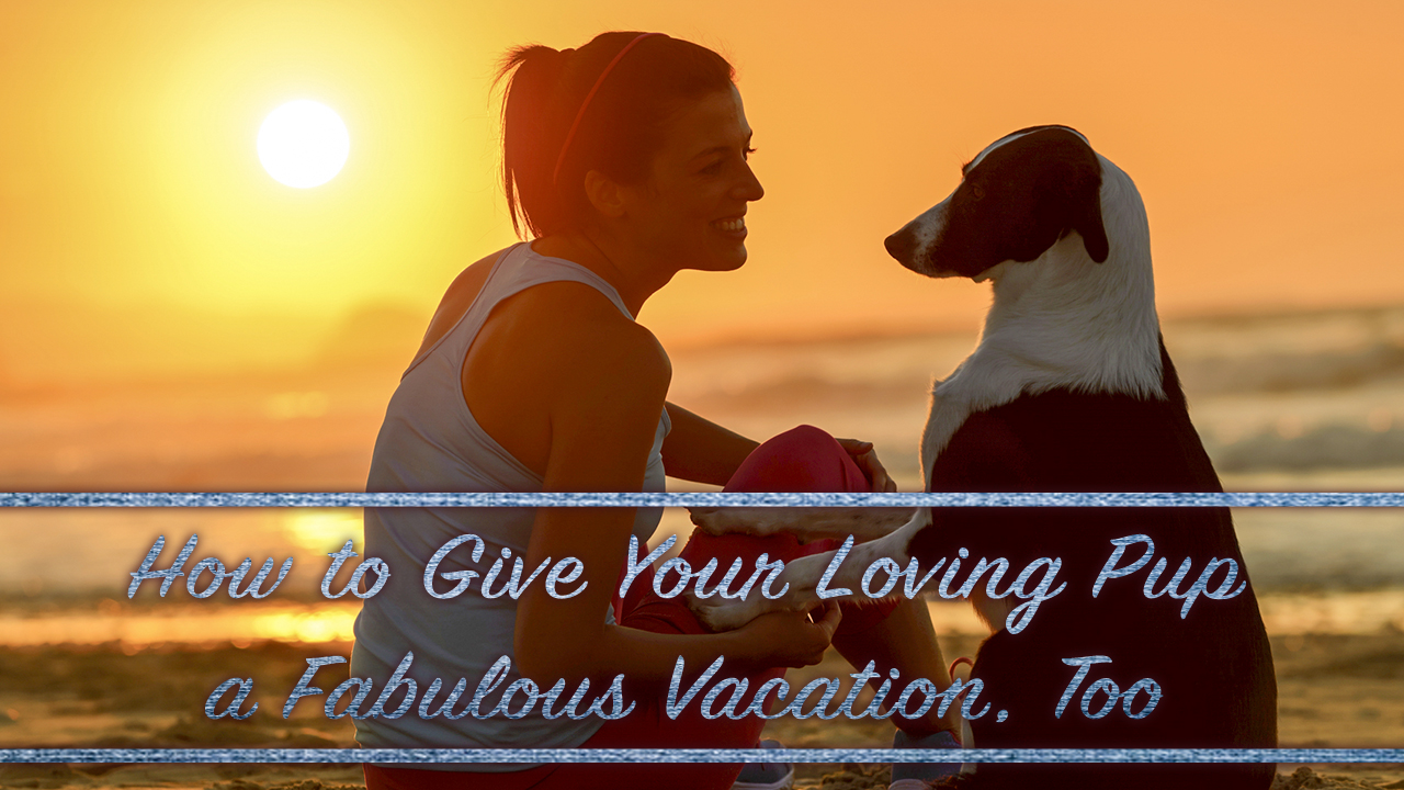 how-to-give-your-loving-pup-a-fabulous-vacation-too