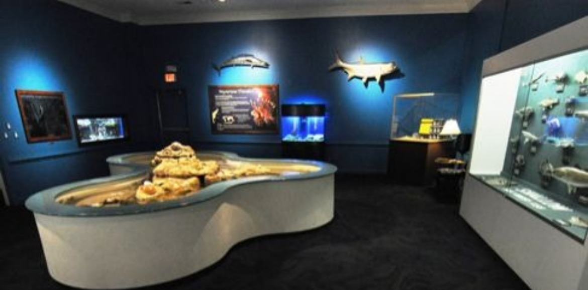 Museum Of Coastal Carolina | Sunset Vacations