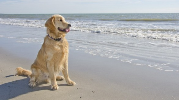 dog on the beach | Sunset Vacations