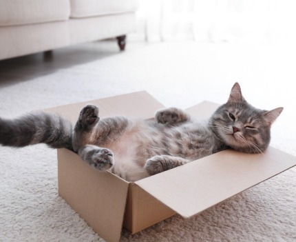 Cat in a box | Sunset Vacations