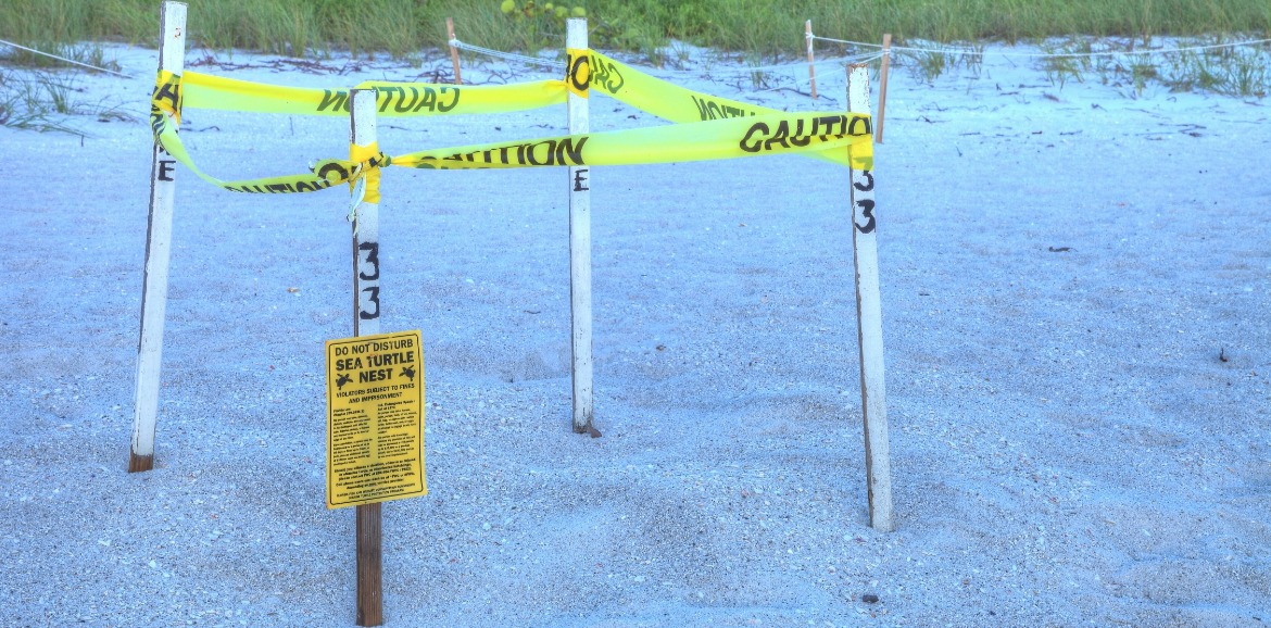 sea turtle nest marked off on the beach | Sunset Vacations