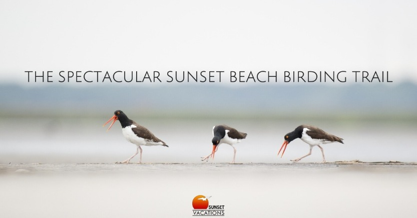 The Spectacular Sunset Beach Birding Trail