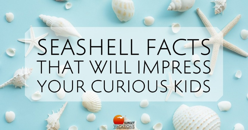 Seashell Facts That Will Impress Your Curious Kids