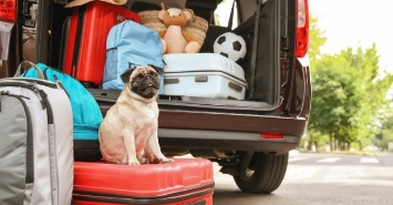 dog sitting on luggage by car being packed for vacation | Sunset Vacations