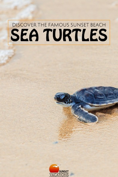 Discover the Famous Sunset Beach Sea Turtles | Sunset Vacations