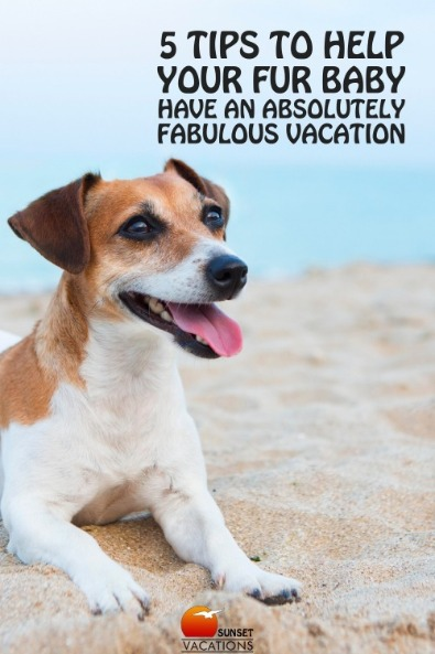 5 Tips to Help Your Fur Baby Have an Absolutely Fabulous Vacation