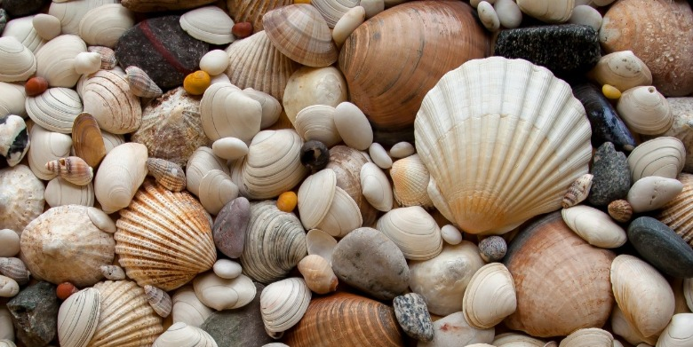 make a seashell disappear | Sunset Vacations