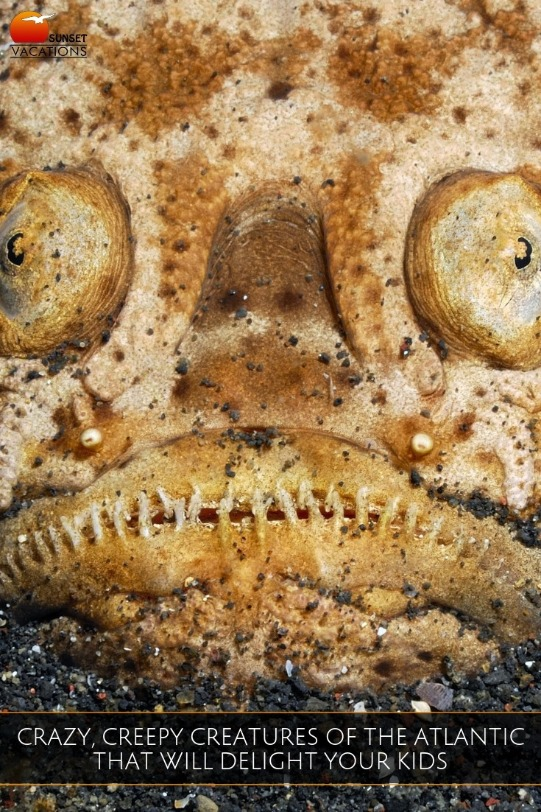 Crazy, Creepy Creatures of the Atlantic That Will Delight Your Kids | Sunset Vacations