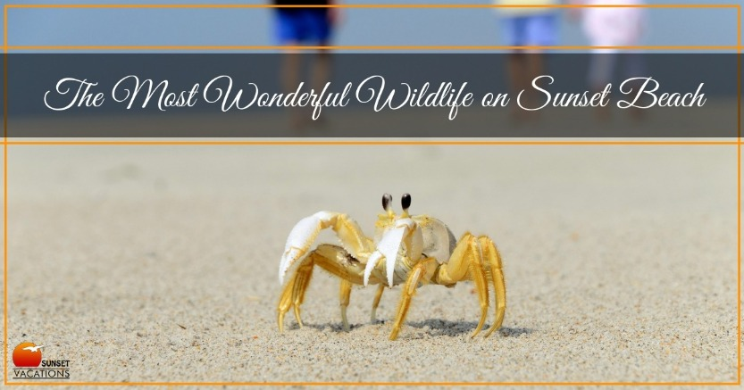 The Most Wonderful Wildlife on Sunset Beach | Sunset Vacations